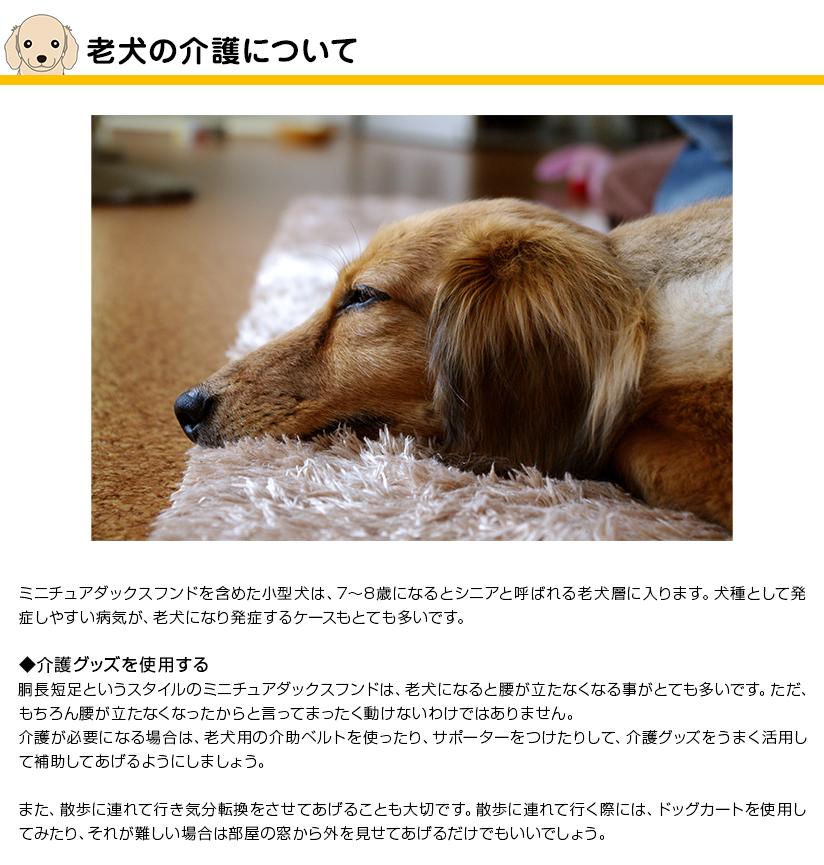 老犬の介護について