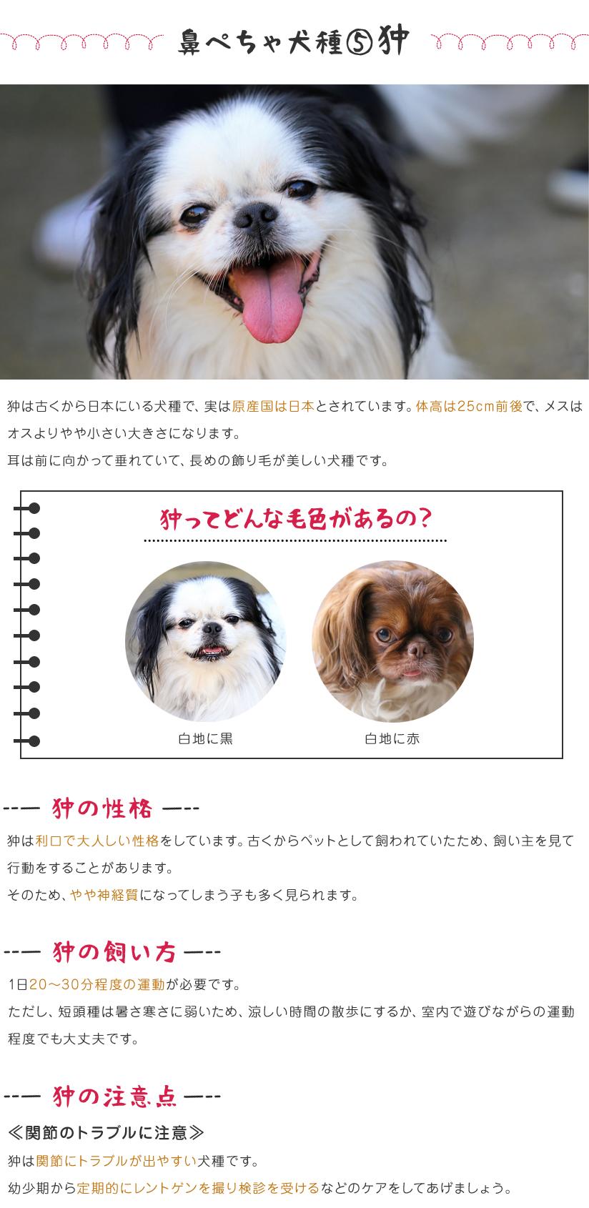 鼻ぺちゃ犬種⑤狆