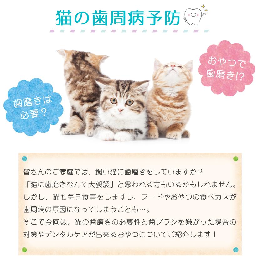猫の歯周病予防