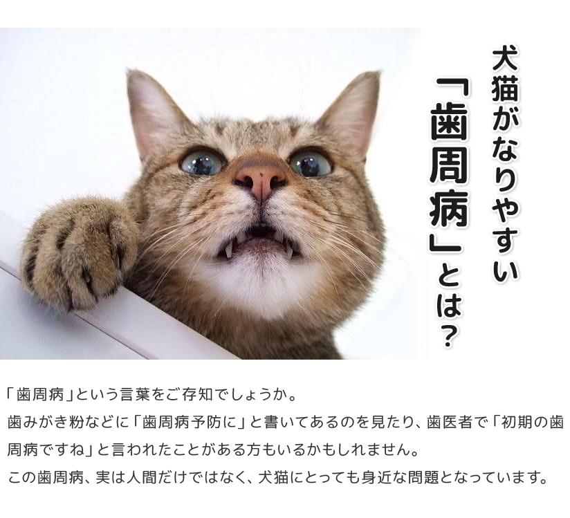 犬猫がなりやすい「歯周病」とは?