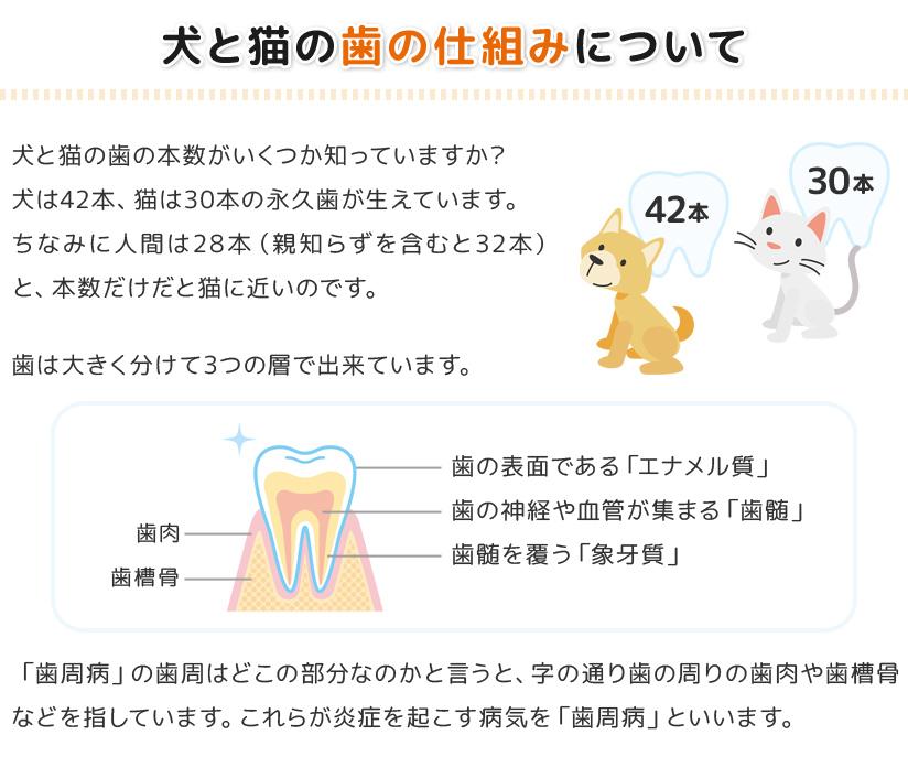 犬と猫の歯の仕組みについて