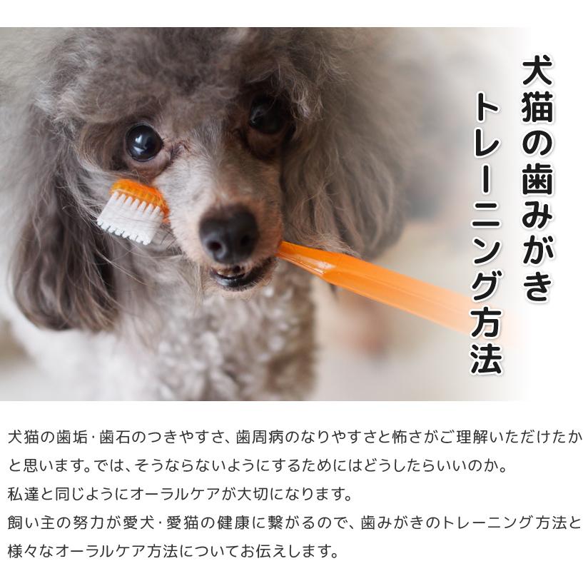 犬猫の歯みがきトレーニング方法