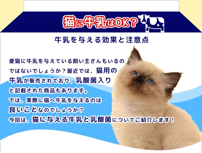猫に牛乳はOK?牛乳を与える効果と注意点