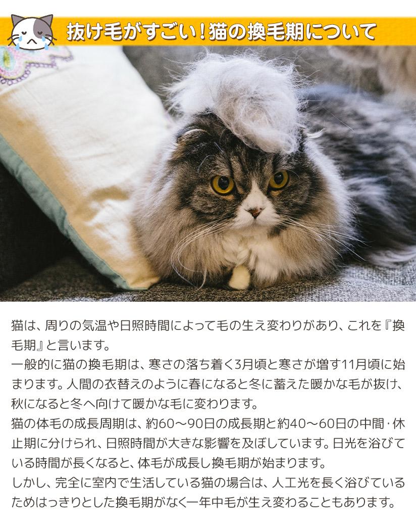 抜け毛がすごい!猫の換毛期について
