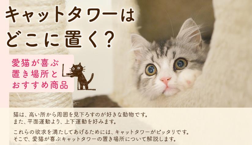 キャットタワーはどこに置く? 愛猫が喜ぶ置き場所とおすすめ商品