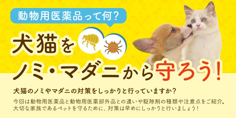 動物用医薬品って何? 犬猫をノミ・マダニから守ろう!