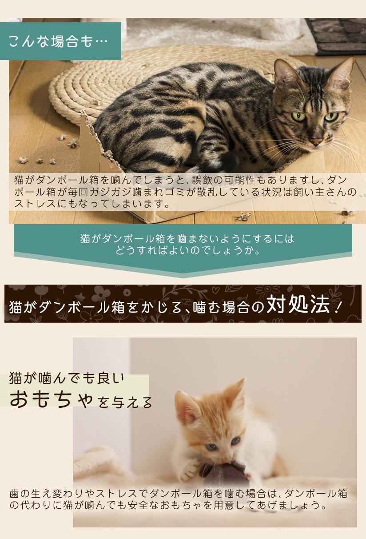猫がダンボール箱をかじる、噛む場合の対処法!