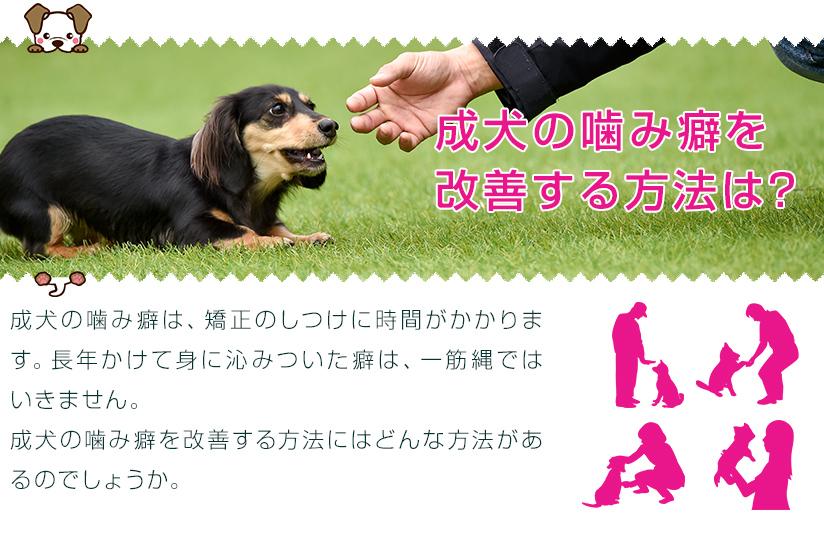 成犬の噛み癖を改善する方法は?