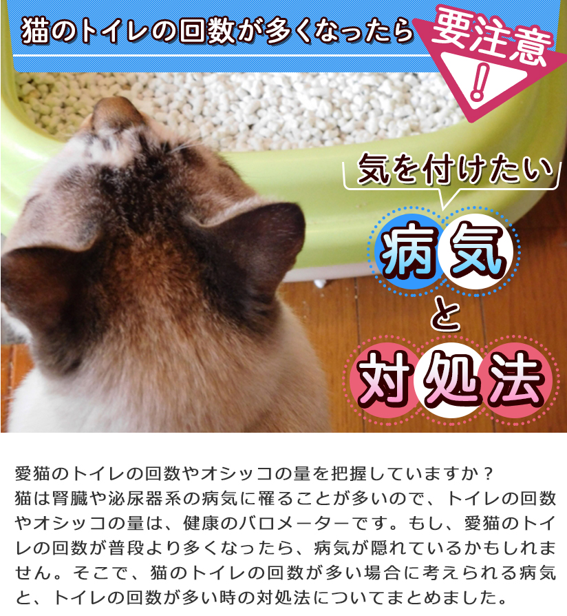 猫のトイレの回数が多くなったら要注意!気をつけたい病気と対処法