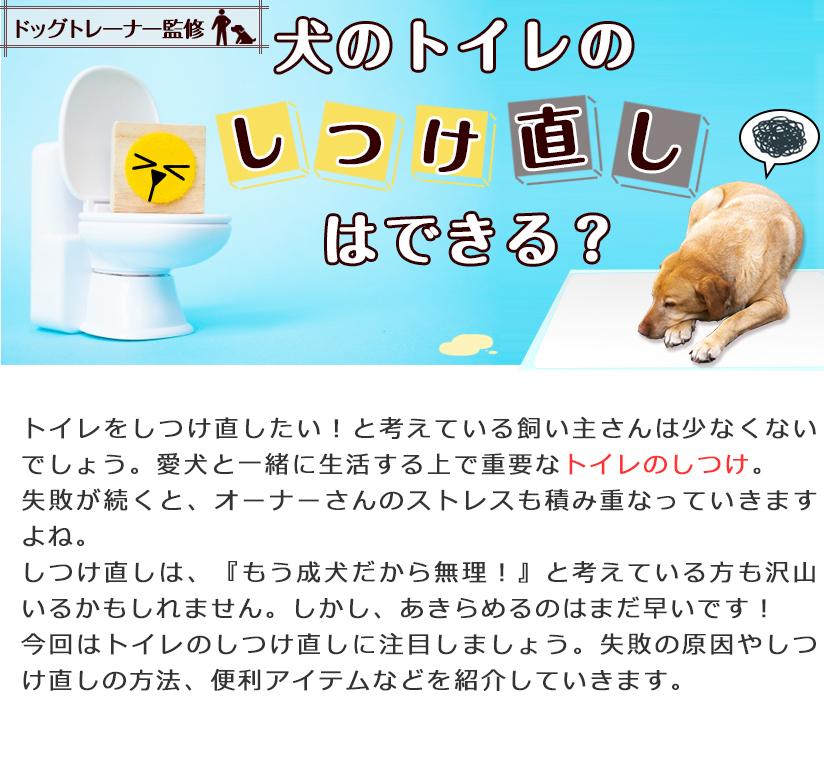 【ドッグトレーナー監修】犬のトイレのしつけ直しはできる?