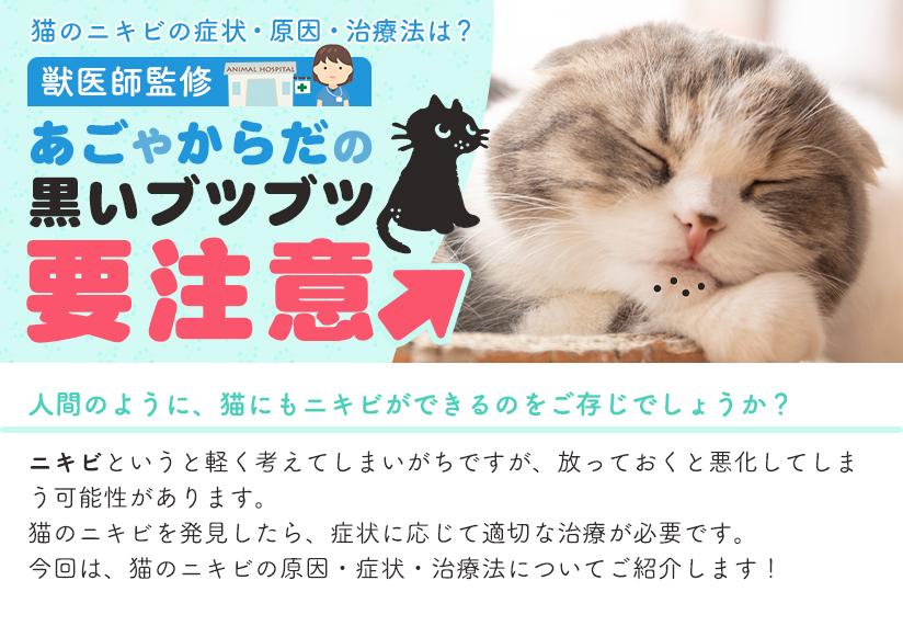 猫のニキビの症状・原因・治療法は? 獣医師監修 あごやからだの黒いブツブツ要注意