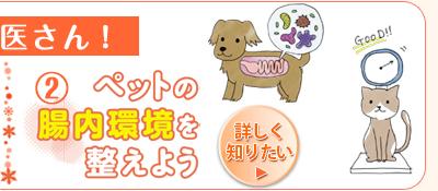 教えて獣医さん!ペットの腸内環境を整えよう