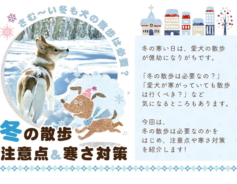 さむ~い冬も犬の散歩は必要?冬の散歩 注意点&寒さ対策