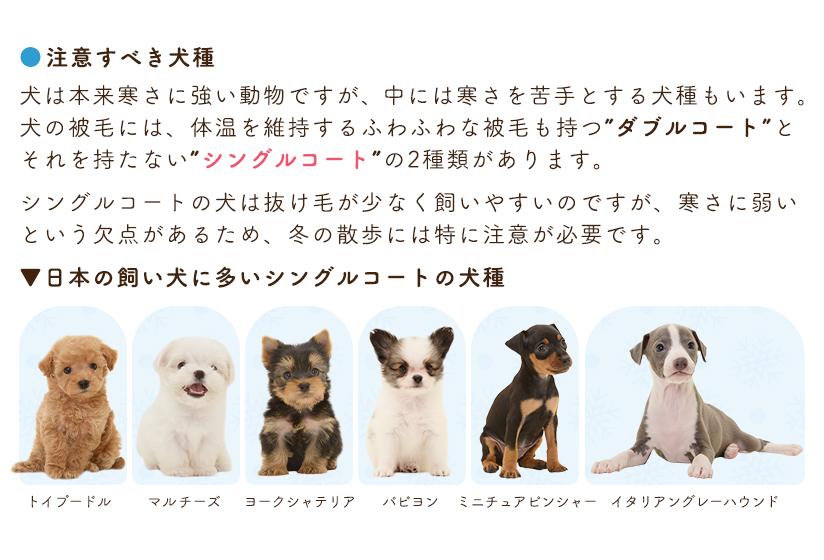 寒い日にも犬の散歩は必要? 注意すべき犬種