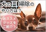 犬の耳掃除のやり方は?おススメグッズをご紹介!