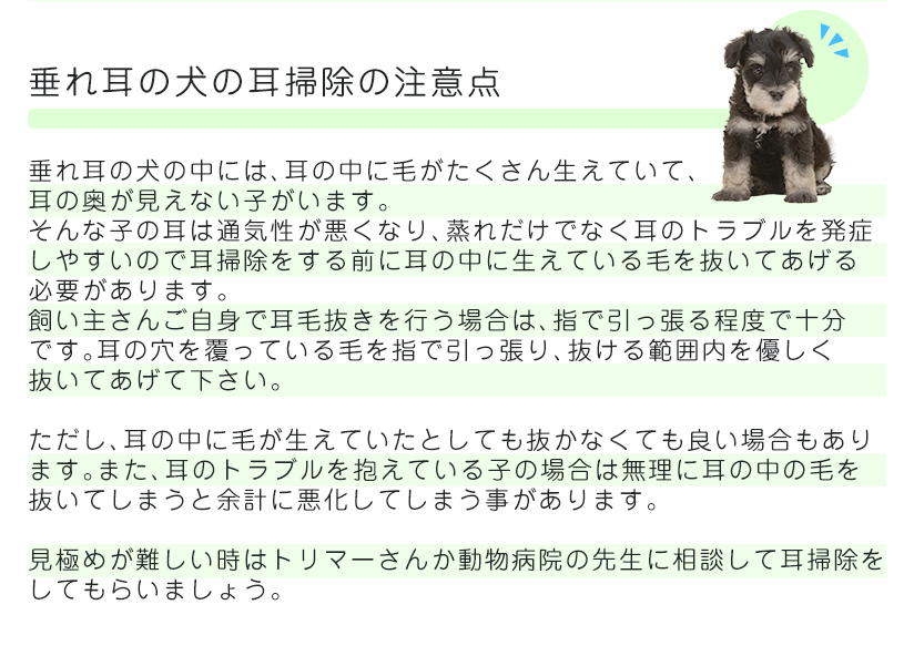 垂れ耳の犬の耳掃除の注意点