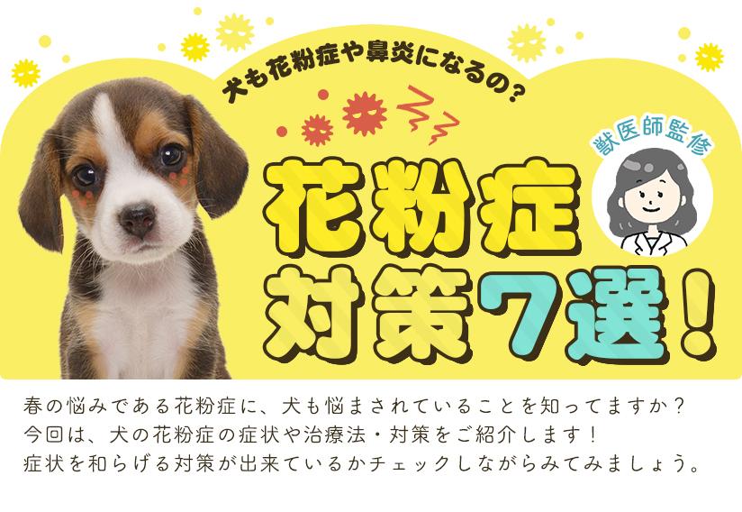 獣医師監修 犬も花粉症や鼻炎になるの? 花粉症対策7選!