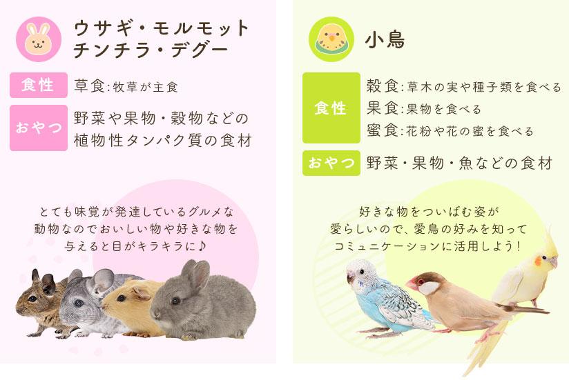 ウサギ・モルモット・チンチラ・デグー/小鳥