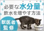 【獣医師監修】必要な水分量 飲水を増やすためには?