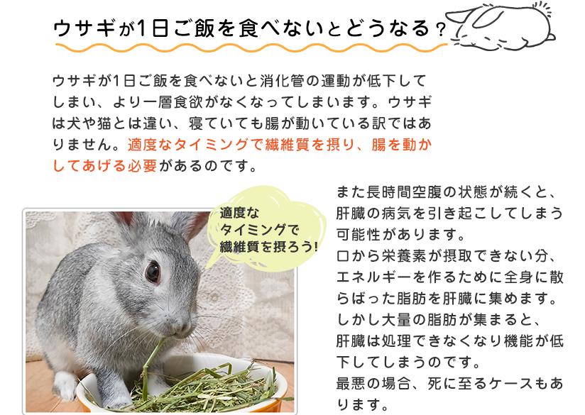 ウサギが1日ご飯を食べないとどうなる?