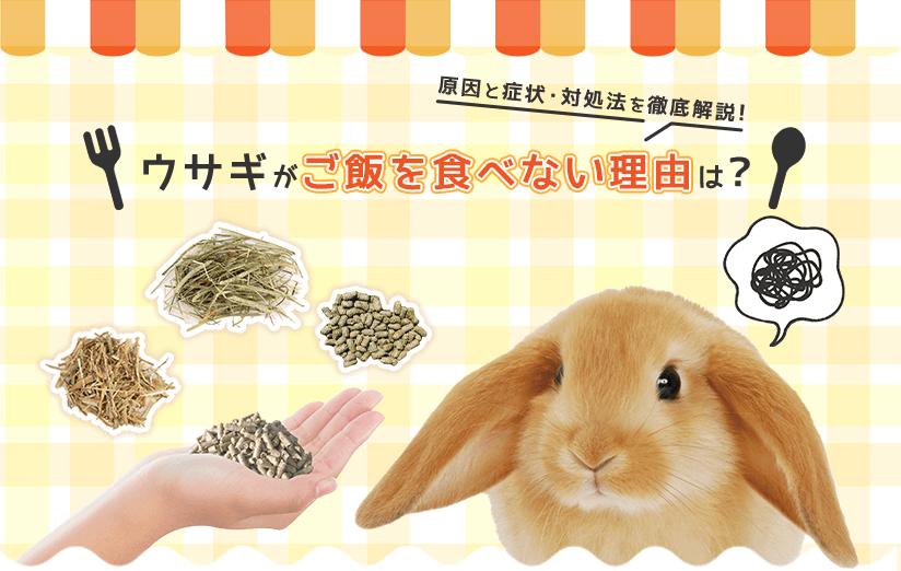 ウサギがご飯を食べない理由は?原因と症状・対処法を徹底解説!