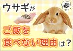 ウサギがご飯を食べない理由は?