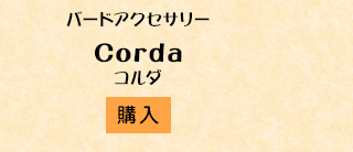 コルダ購入
