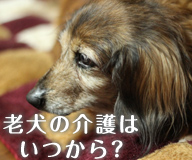 老犬の介護はいつから必要になるの?老犬介護に便利なグッズを紹介!