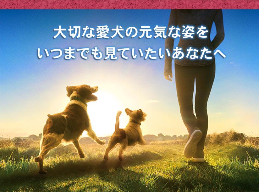 大切な愛犬の元気な姿をいつまでも見ていたいあなたへ